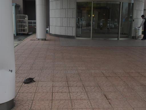 20150419・福島カメ04
