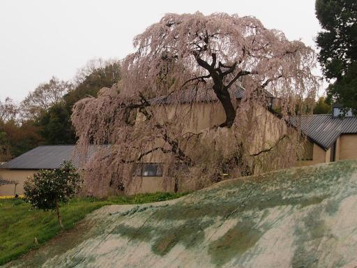 20150419・福島空後01・三春の町