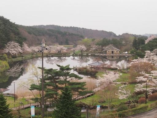 20150523・桜17・0420・岳温泉鏡ヶ池