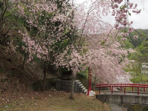 20150523・桜22・0503・熊王大権現