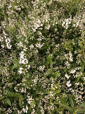 150420-flower.jpg