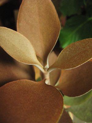 150504-plant.jpg
