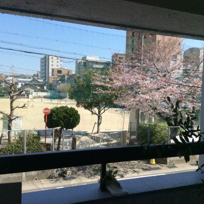 150328-桜