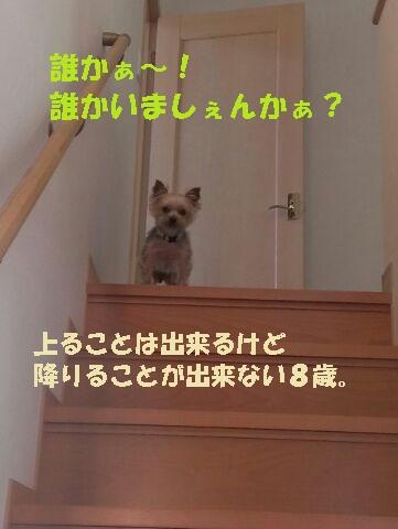 小梅 階段