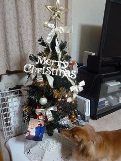 2014年12月クリスマスの1