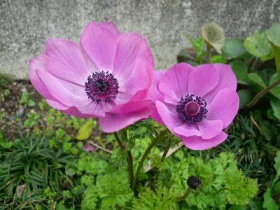 2015年4月千葉の花の3