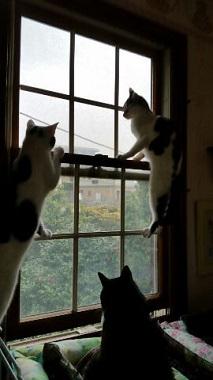 よつば 窓5