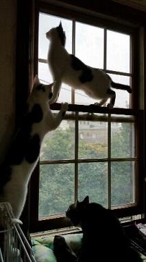 よつば 窓3