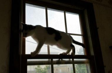 よつば 窓