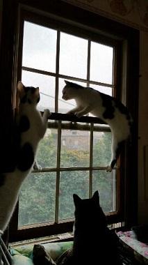 よつば 窓4