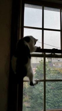 市松 窓2