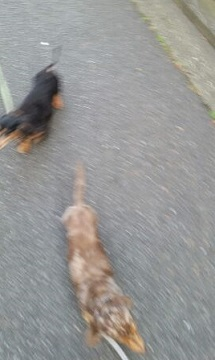 イリー散歩4
