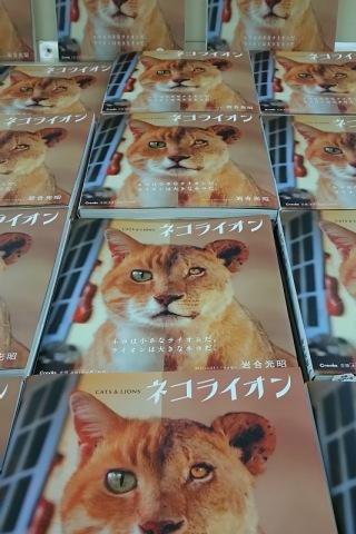 ネコライオン写真集