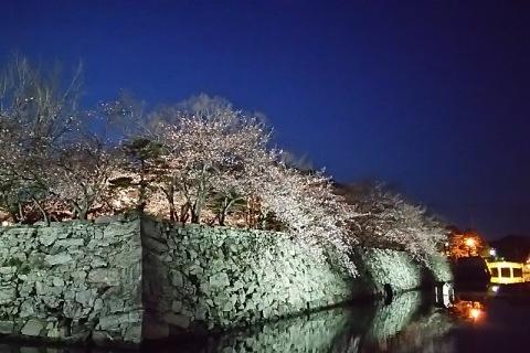 徳島公園夜桜