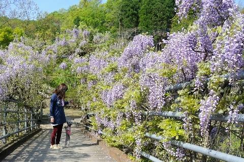 里山でお散歩