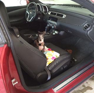 Drive Camaro w/Giulia