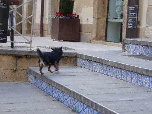 タイルの階段と犬s