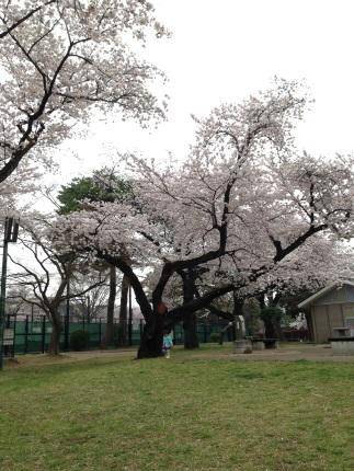 嵐丸 2015.4.7-11