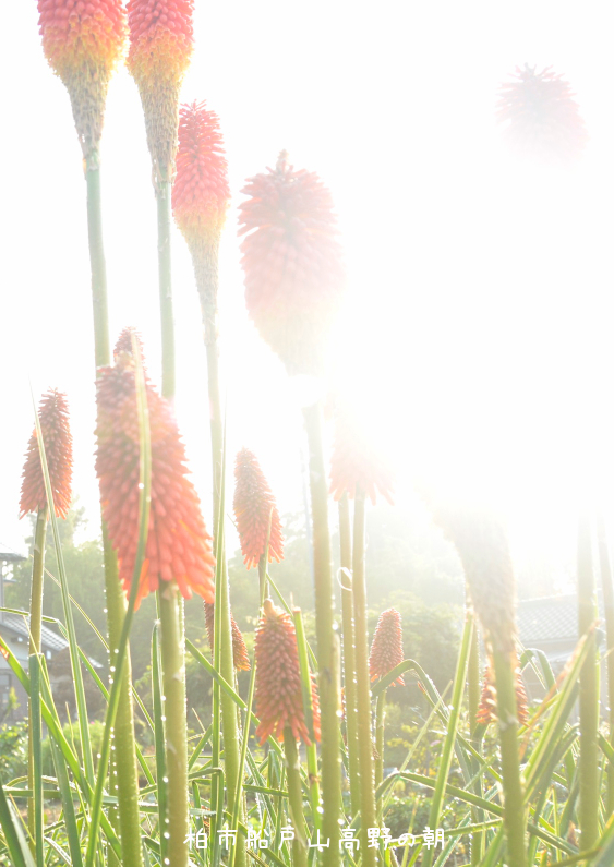 山神宮の朝