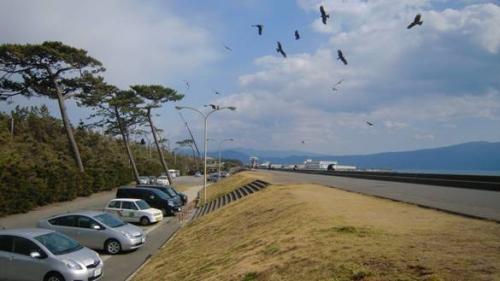 正月の静岡県沼津市千本松原に鳥が飛ぶ光景をデジカメ写真撮影しました