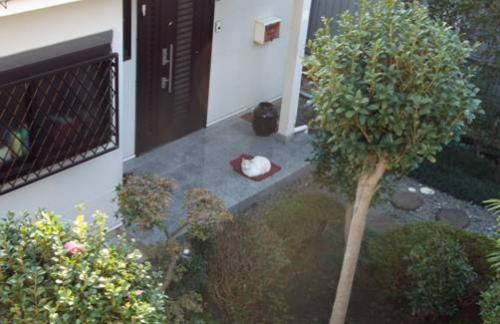 隣家の玄関に住み着いてる野良猫をデジカメ写真撮影してみました