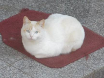 ブログ写真で隣家に住み着く野良猫をクローズアップしデジカメ写真撮影してみました