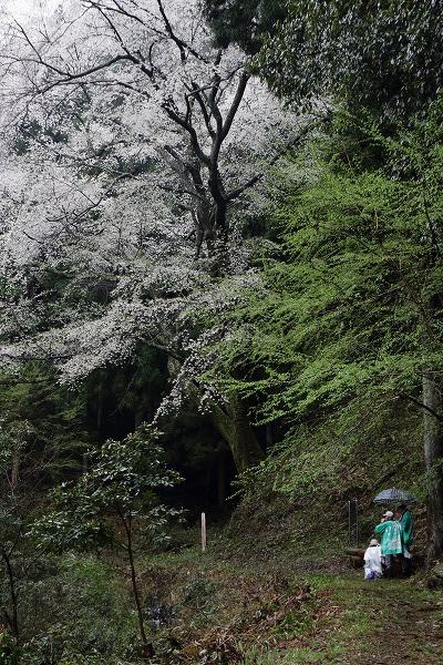 源太桜 150405 02