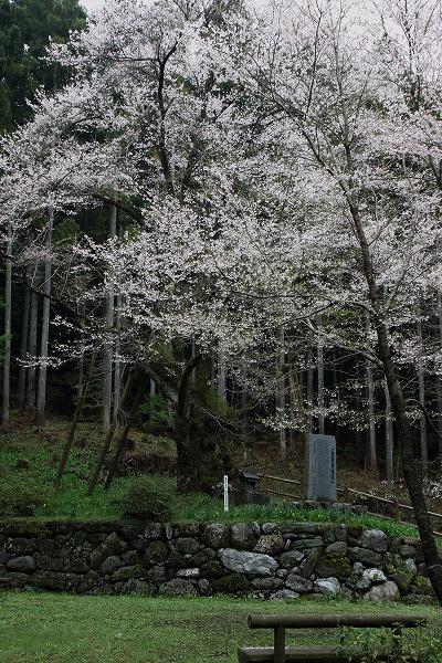 上川世善桜-御嶽 1504074 002