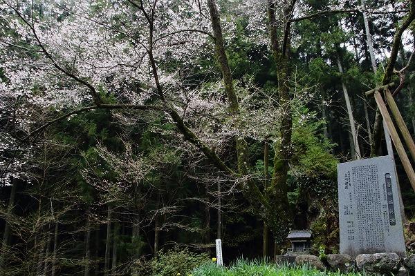 上川世善桜-御嶽 1504074 007