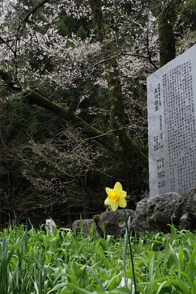 上川世善桜-御嶽 1504074 038
