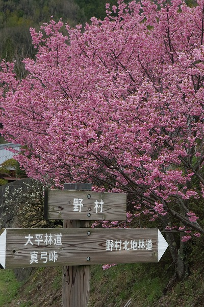 小田野村・陽光 150404 006