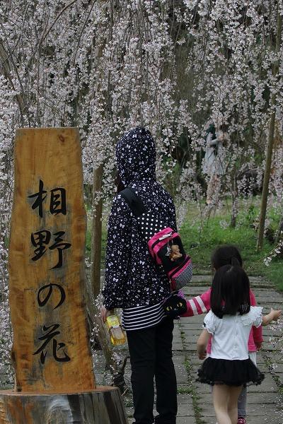立石相野・枝垂桜 150404 049