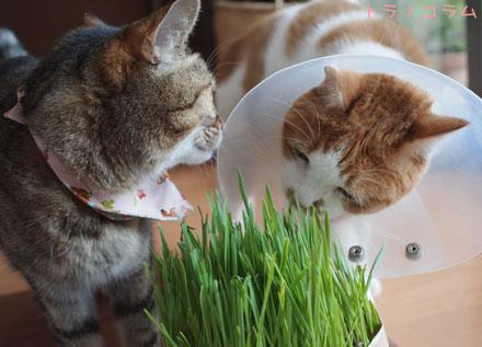 猫草がとりもつ仲?