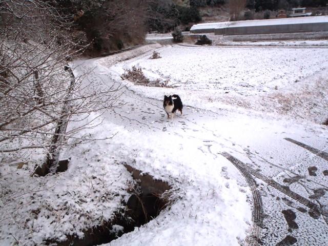 雪とりく20141219