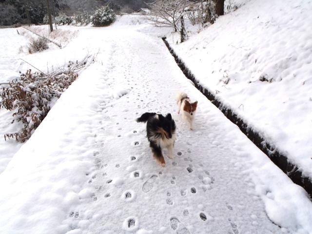 雪やこんこ20150101