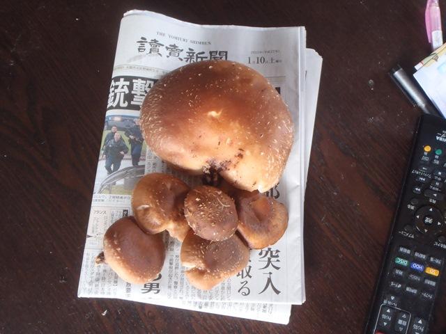 シイタケ20150101