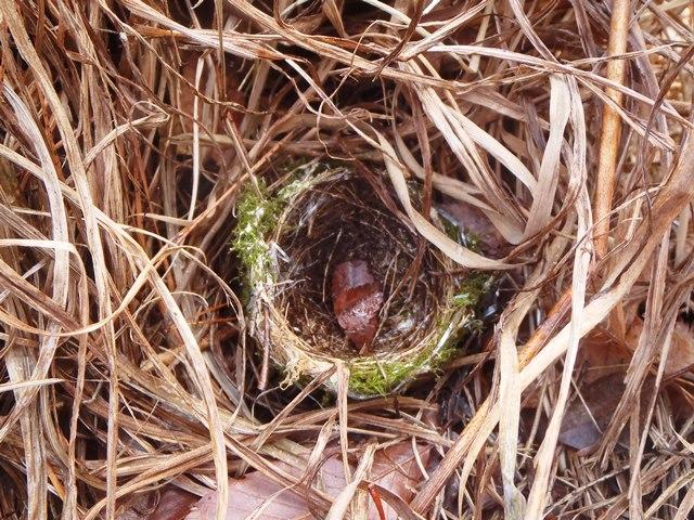 鳥の巣20150117