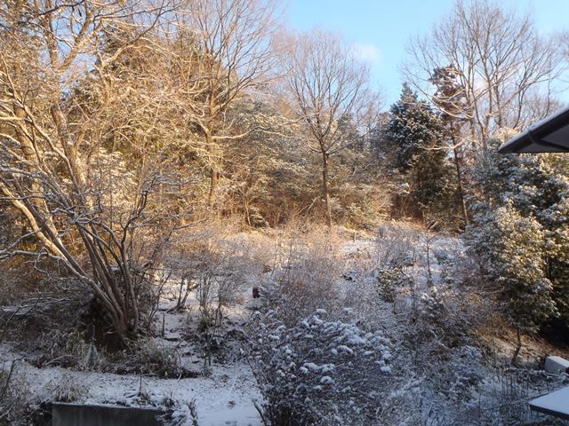 雪と朝日20150201