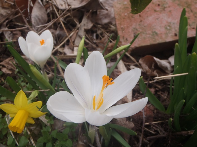 春20150318