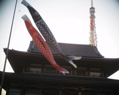 増上寺の鯉のぼり:R2