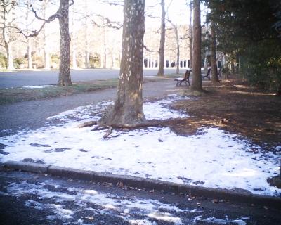 プラタナスの足元の雪・新宿御苑:R2