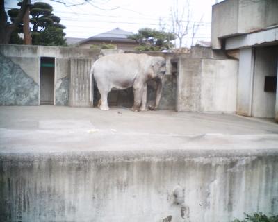 ゾウのはな子・井の頭自然文化園