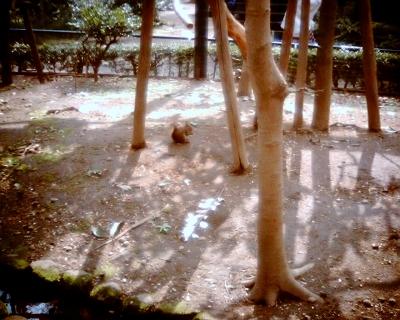 リス・井の頭自然文化園:Entry