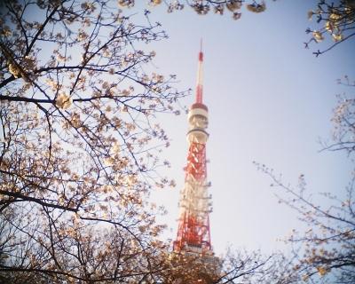 桜に包まれた東京タワー:R2