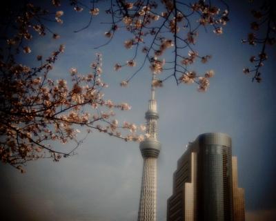 スカイツリーと桜・隅田川:Entry