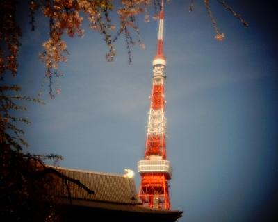 東京タワーと花見・増上寺:Entry