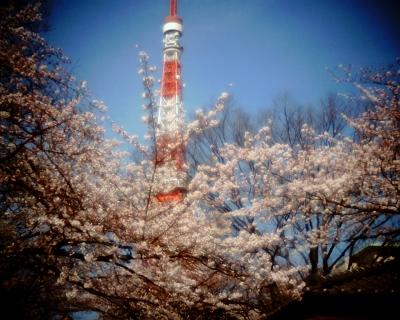 桜の中に立つ東京タワー:Entry