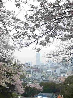 2015桜2