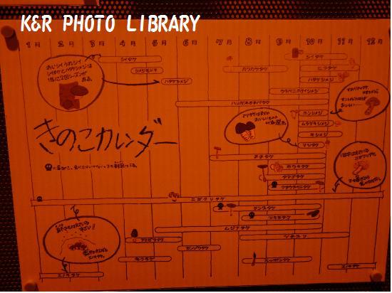 10月19日茨城県きのこ博士館内部3