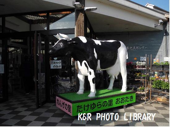 11月23日シンボルの牛